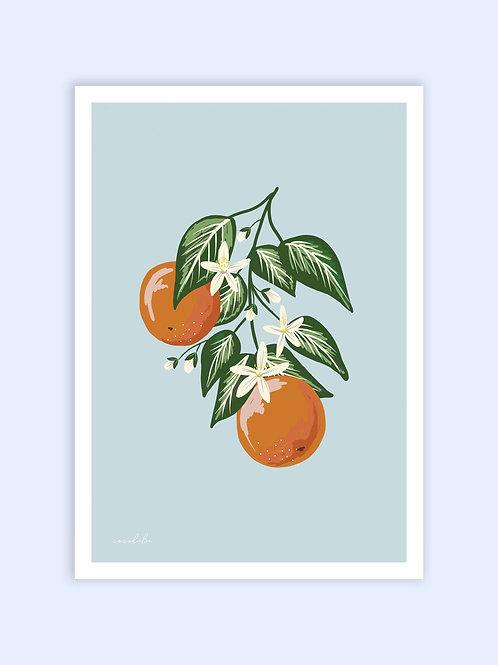 Orangecello print