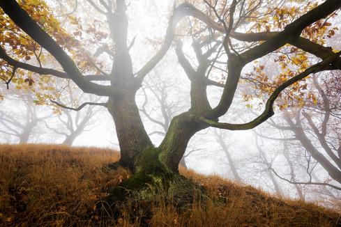 Mhla v lese