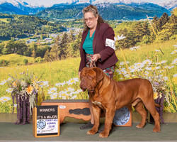 Noble De Le Tribu De Laza Terry all show
