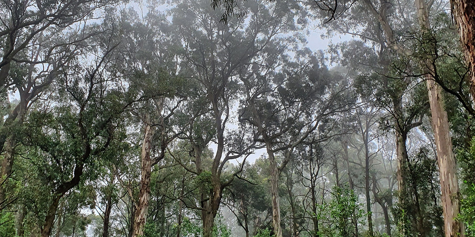 Sound Medicine Hike: The Enchanted Forest (online)