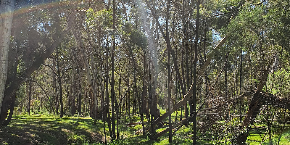 Sound Medicine Hike - Gresswell Forest 5km