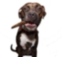 Bonito stick dog PNG 400X.png