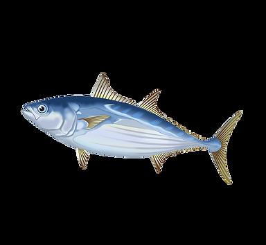 Bonito Fish PNG 640 x 345.png