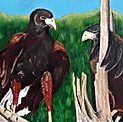 Hawk-itude