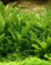 vordergrundpflanzen1.jpg