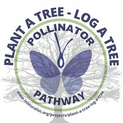BoiBlitz_Plant a tree - log a tree.png