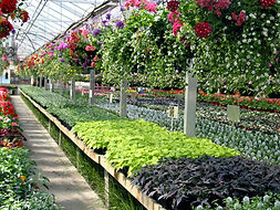 Inside of retail greenhouses