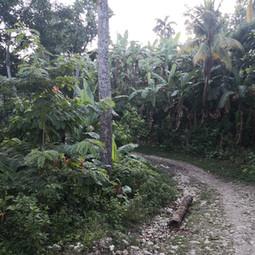 La piste pour arriver à l'école de Castaches