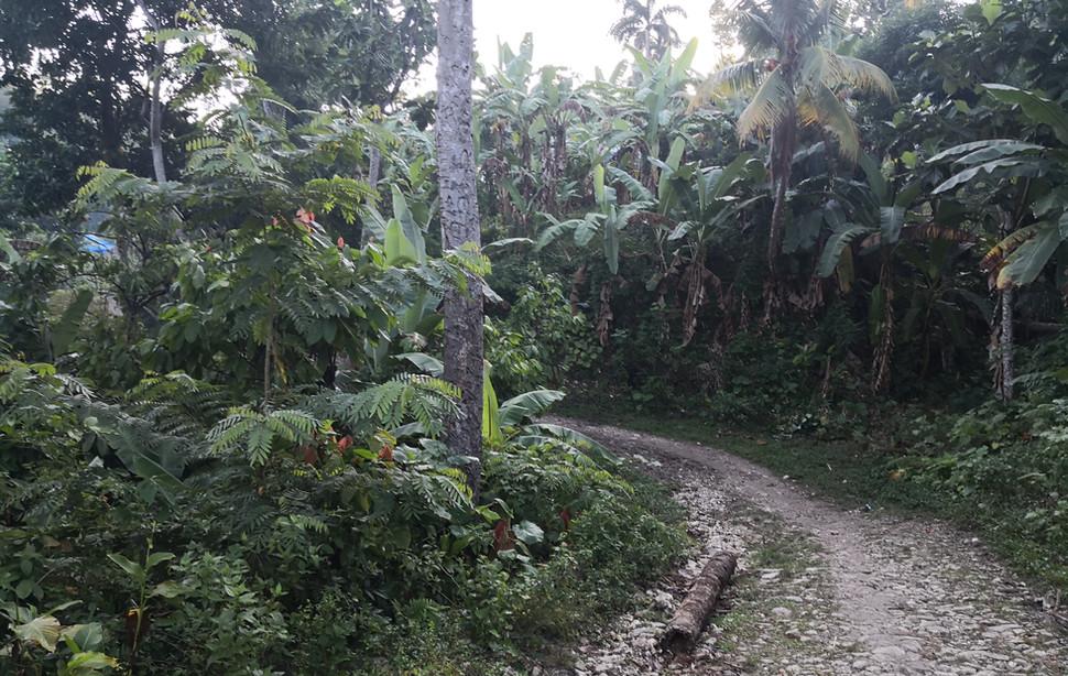Végétation près de Castaches