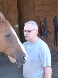 """Das Pferd """"Acorando"""" streicheln"""