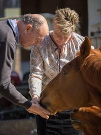 """Das Pferd """"Acorando"""" kriegt ein Leckerli"""