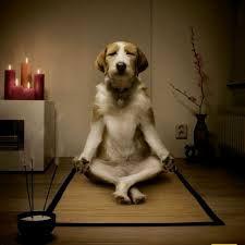Zen hond.jpg