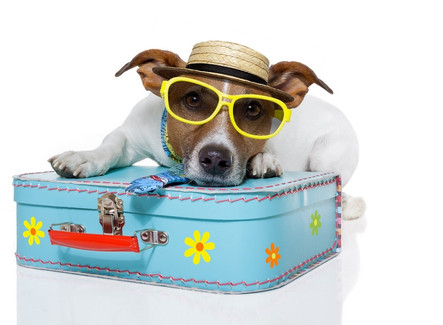 Vakantie geboekt maar nog niet de opvang voor jouw hond? Wees er snel bij!