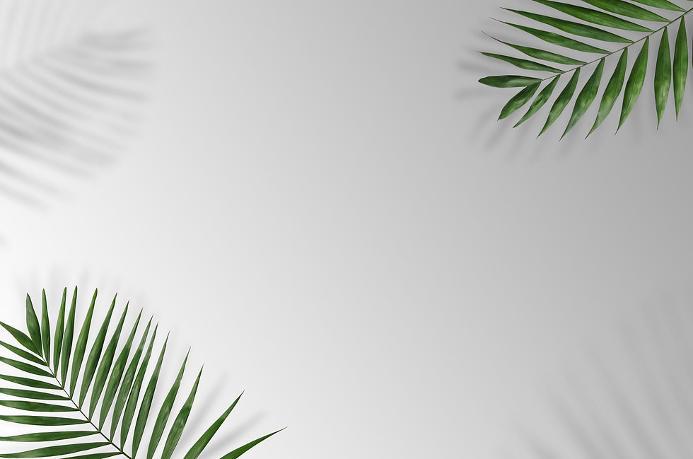 Tropical palm leaves on a white and grey