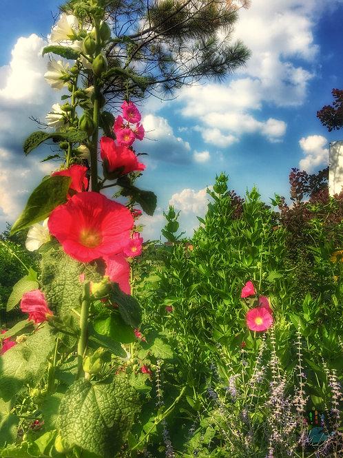 Summer's Blossom