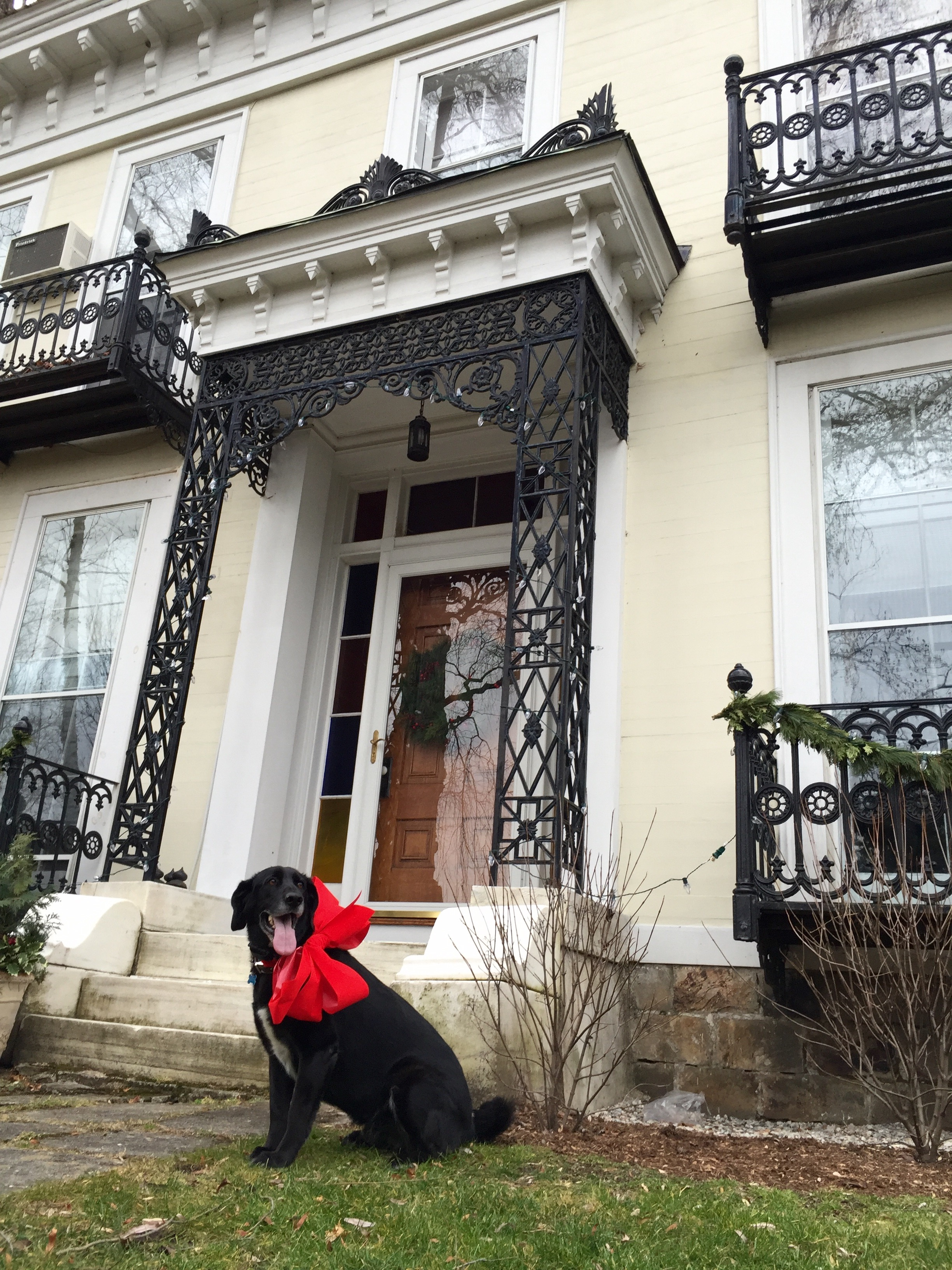 Buddy the Manor Dog