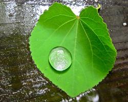Rain+Drop