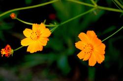 Flowers+for+Tony+from+Turkey