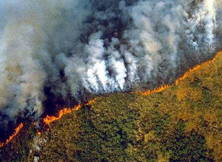 Dopo gli incendi in Amazzonia e Siberia, sotto attacco la foresta pluviale del Congo.