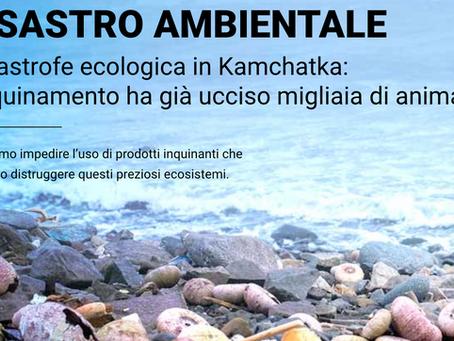 Disastro ambientale in Kamchatka: petrolio ed ennesimo crimine contro la Natura.
