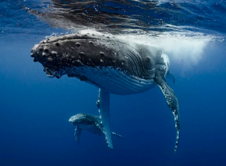 Firma la petizione Greenpeace per la salvaguardia degli Oceani.