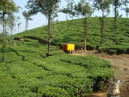 Celebrate your Christmas Vacation at Kerala - God's own Country