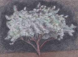 4, White Blossoms