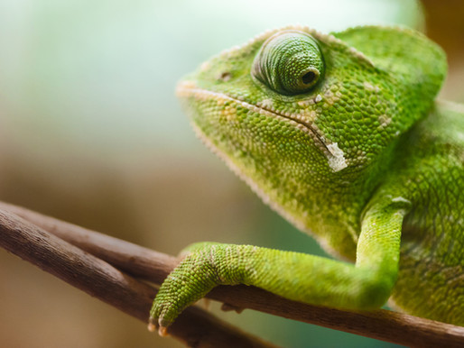 Are You a Career Chameleon?