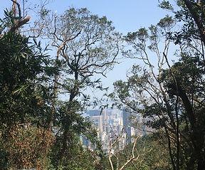 Green Trail Hike Hong Kong