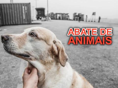 AGU pede a extinção da liminar que proíbe abate de animais resgatados de maus-tratos
