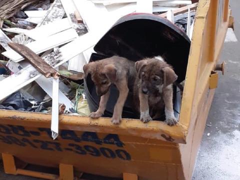 Filhotes são abandonados em caçamba de entulho no Centro de São Leopoldo/RS