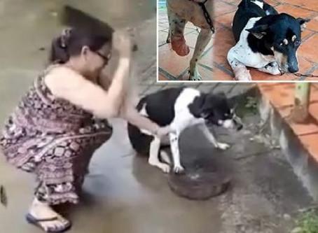 Registrado em vídeo, mulher cortando pata de cachorro com um facão; caso é investigado