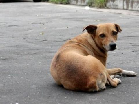 De quem é a responsabilidade pelos danos causados por animais?