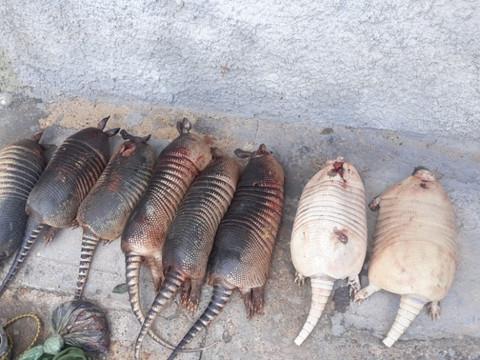 Caçadores flagrados com animais silvestres mortos são presos no Piauí