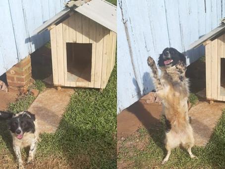 TAQUARI/RS: Taquariense usa restos de madeira para fabricar casinhas para animais de rua
