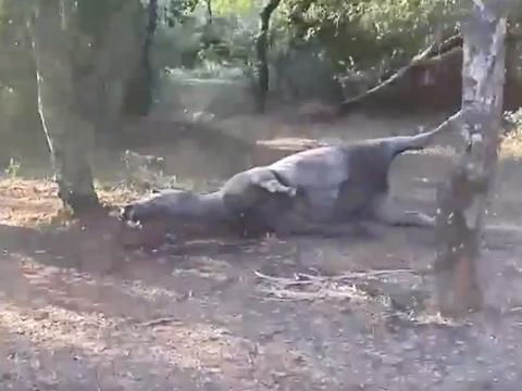 Dias após o Rodeio de Taquari/RS, cavalo é encontrado morto com a pata quebrada