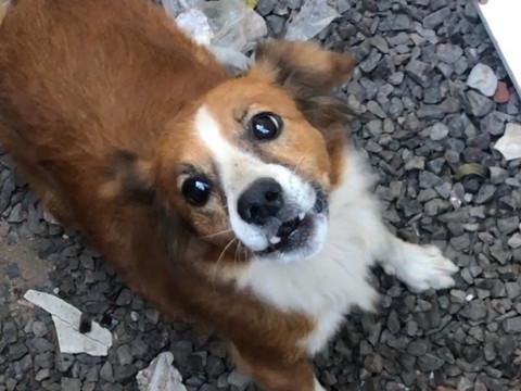 Cachorra é deixada abandonada por tutora que se mudou de TAQUARI/RS