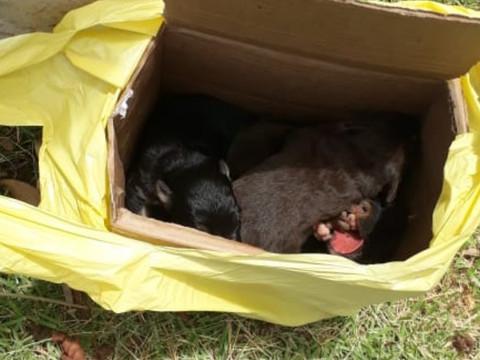 6 filhotes são abandonados em Taquari/RS; Cidade não tem projetos para animais