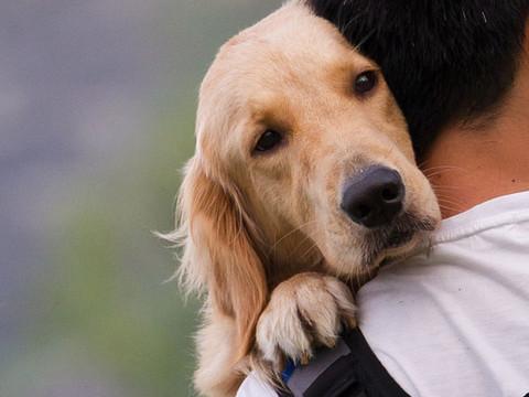 CIÊNCIA: O que faz os cães serem animais tão amigáveis?