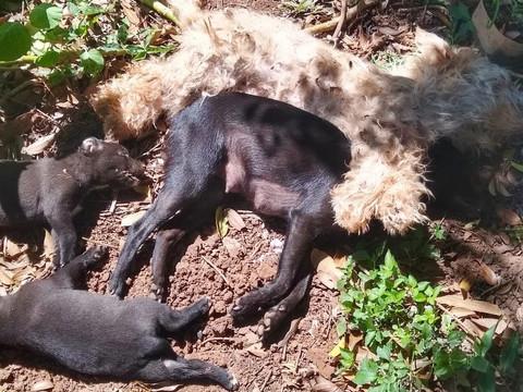 CRUELDADE: 5 animais são envenenados em Taquari/RS; tutora desabafa nas redes