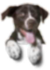 81908-sitting-pet-dog-cat-puppy-dogs.png