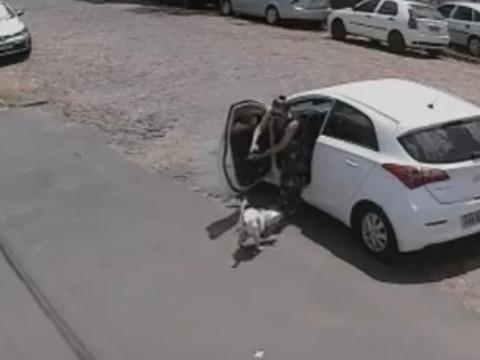 Cão deficiente é abandonado duas vezes no mesmo dia em São Leopoldo/RS