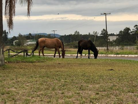 Cavalos soltos por TAQUARI/RS, provocam acidentes e ainda continuam pelas pistas