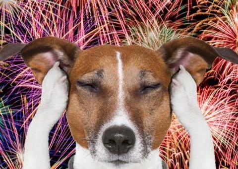 Os cães e os maldosos fogos de artifício