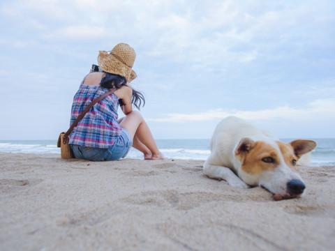 DICAS IMPORTANTES: Os cuidados com os cachorros no calor