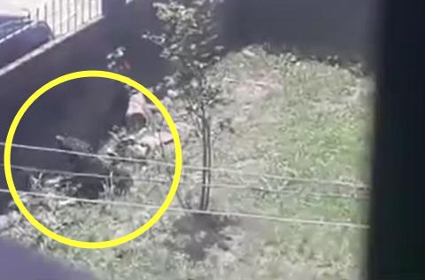Cachorro é morto por ataque de abelhas na cidade de Taquari/RS