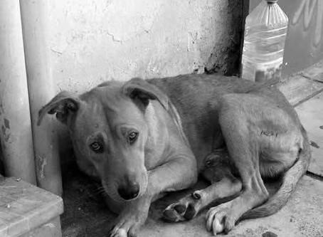 ONG protocola pedido de inclusão da CAUSA ANIMAL na lei Orçamentaria de TAQUARI