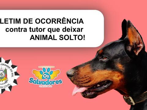 Já se pode abrir BOLETIM DE OCORRÊNCIA contra tutor que deixar ANIMAL SOLTO