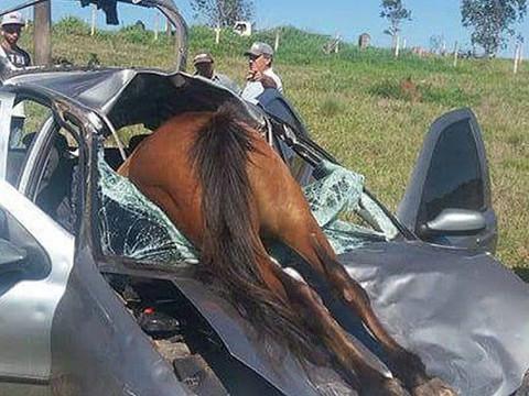 Cavalos e Cachorros soltos nas estradas de Taquari/RS