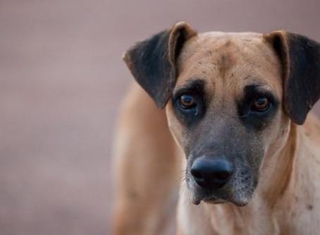 Câmara de Vereadores de Tabaí/RS se compromete a ajudar na CAUSA ANIMAL